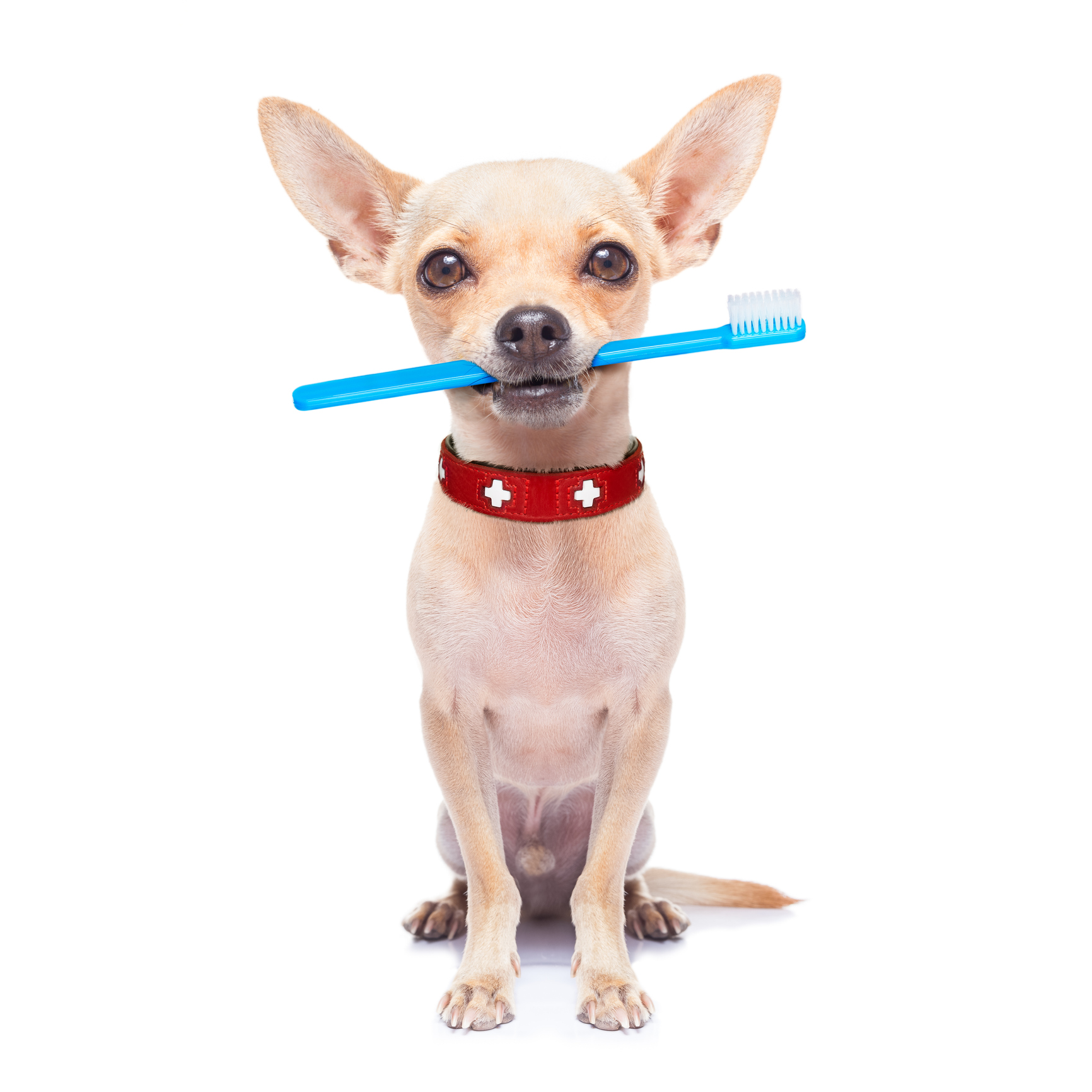 Why You Should Have Yearly Dental Checkups For Your Pet