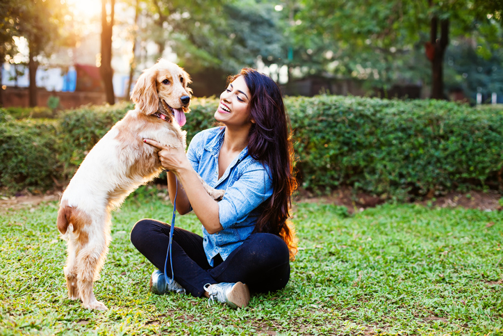 How to Use Positive Reinforcement To Train Your Dog