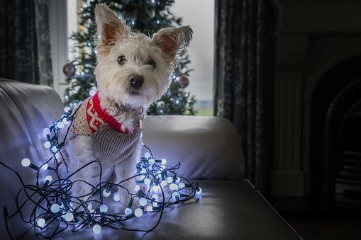 Common Holiday Hazards for Pets